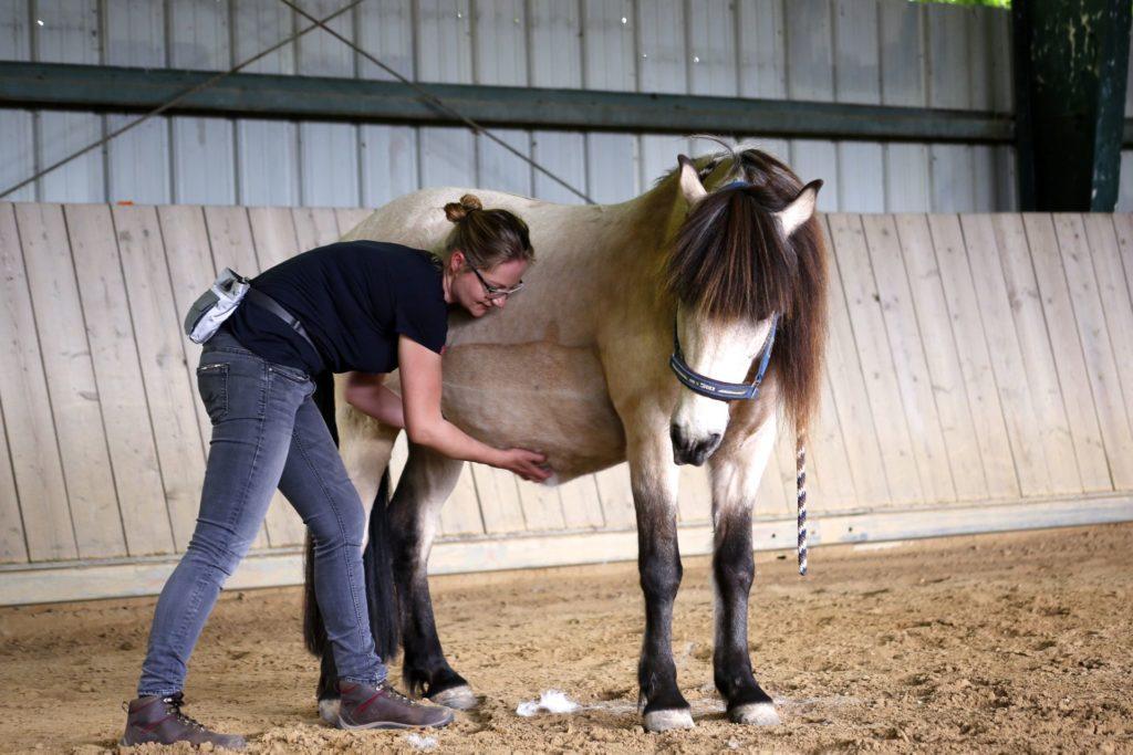 Medical Training Pferd abtasten und am Bauch