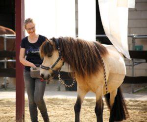 Eva-Marie Essers mit Pferd Clickertraining und Bodenarbeit