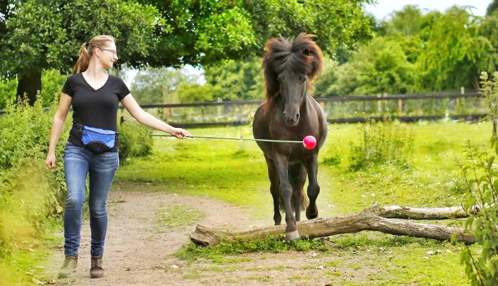 Freiarbeit und Clickertraining mit Pferden